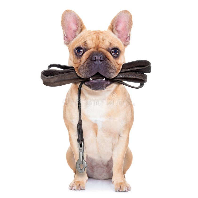 dog with leash in mouth.jpg