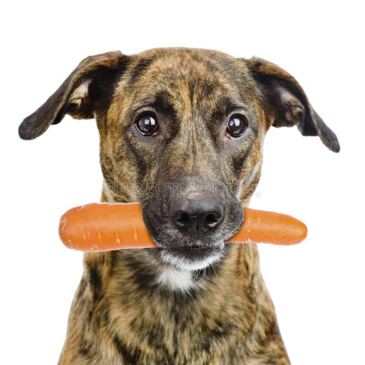 ret8065_product_dog-eating_lores.jpg
