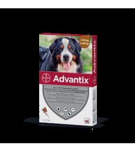 advantix-deparazitare-externa-caini